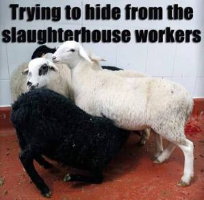 hiding-from-slaughter